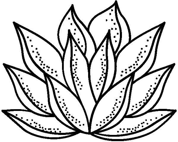 nlotus-logo